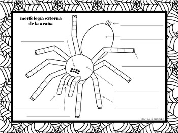 {Free} Label a Spider ~ Etiquetar la araña [Dual Immersion]