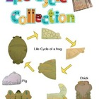 Life Cycle Collection